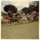 bluebreeze-kennels-history-02