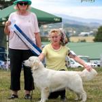 cleo1-ribbon-golden-retriever-purebred-dog