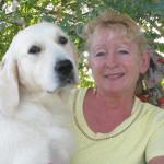 cleo2-fun-golden-retriever-purebred-dog